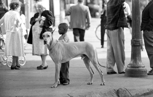 George S. Zimbel, Black Boy & Great Dane, Harlem, 1962