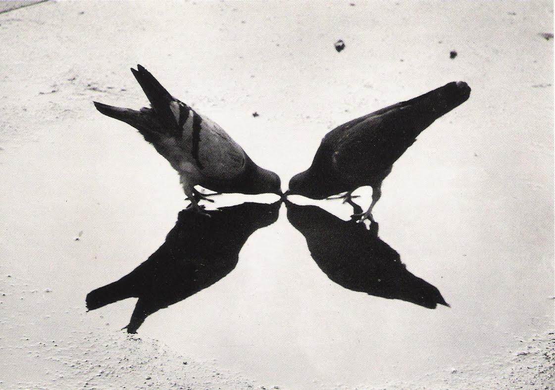 Ernst Haas, Trafalgar Square Pigeons. London. 1949