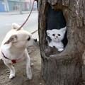 Tree Art - Kínából