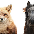 Állati arckifejezések