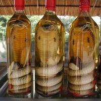 Vietnámi kígyóborok