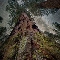 Portrék fákról