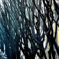 A városi fák sanyarú sorsa (2. rész)