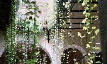 A kertek luxusa - télikert és orangerie