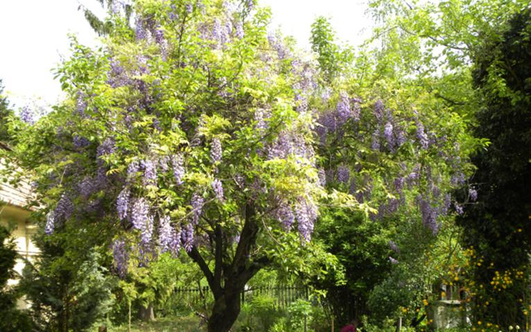 Kedvenc kertem – szandai Anglia