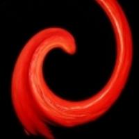 Véres Tampon Hadművelet – magyar dalok a menstruációról
