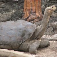 TÚL NAGY A VILÁG - 4. fejezet - Galápagos, 3. (befejező) rész