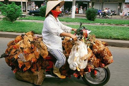NF_110726_chicken-bike.jpg