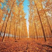 Októberi erdő