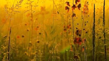 A vadvirágokról