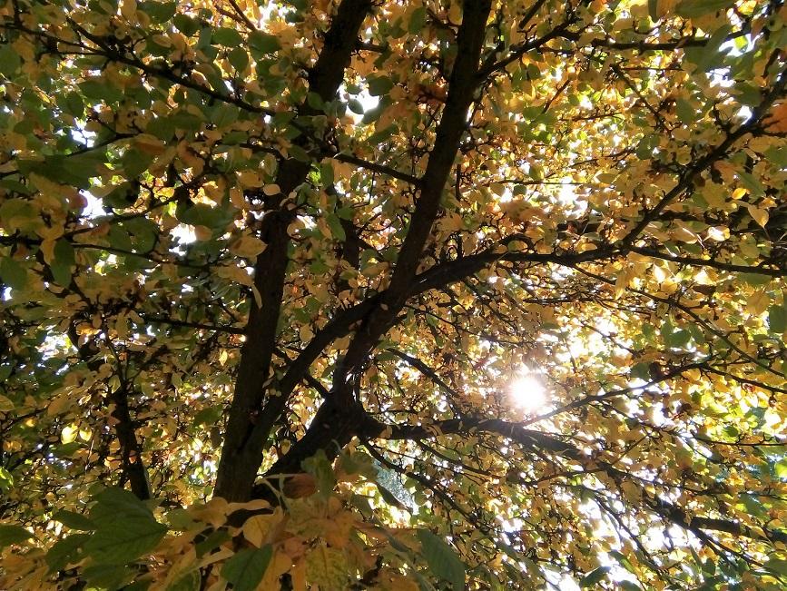 autumn_nemeth_gyorgy_egy_gyogyszeresz_feljegyzesei.jpg