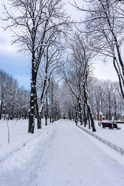 winter-3132738_960_720.jpg