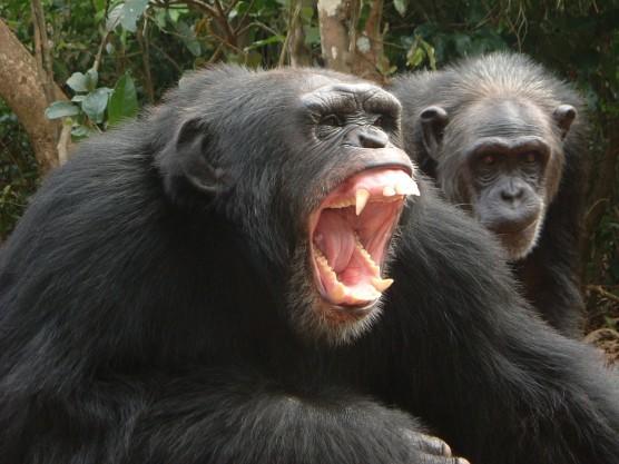 ar-chimp-goodall-02.jpg