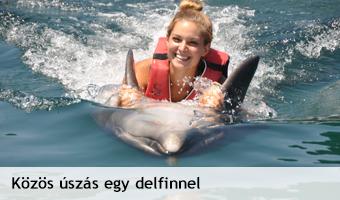 delfin_uszas.jpg