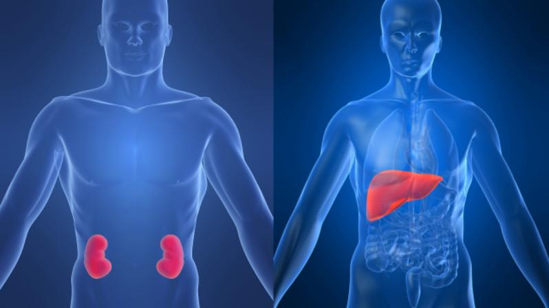 5_8_2_1_kidneyliver.jpg