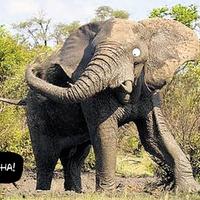 Látja-e a hangya az elefántot?