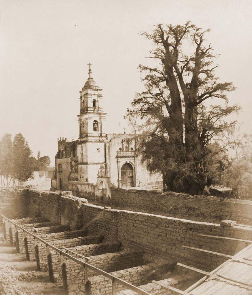 A szomorú éj fája Popotlában. (Mexikó). Jelzet: FTD 140 – Történeti Fénykép- és Videótár