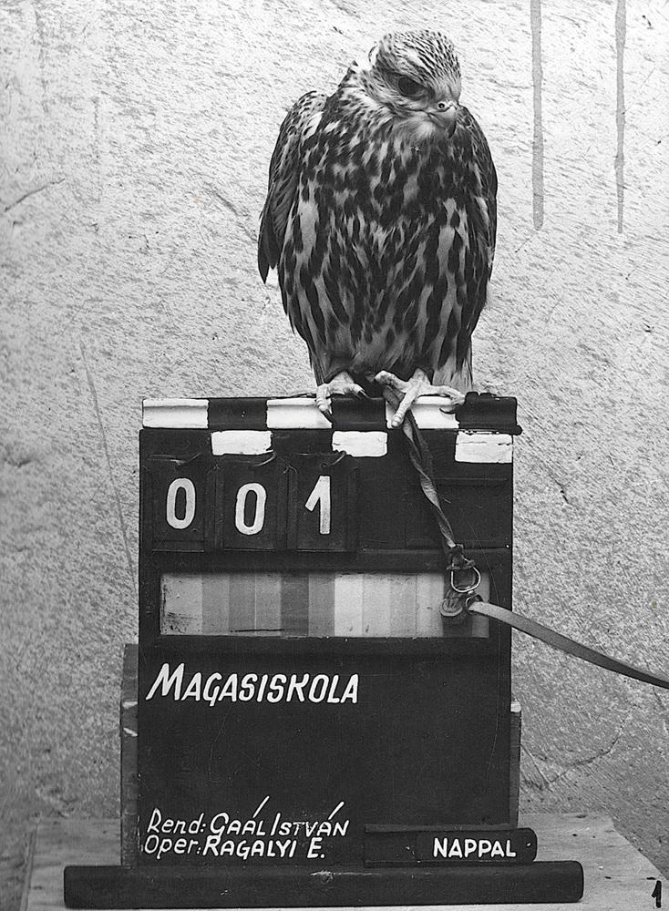 Fotó: Szóvári Gyula. A Magasiskola c. film forgatásán készült fénykép. A filmet rendezte: Gaál István A film operatőre: Ragályi Elemér – Fényképtár