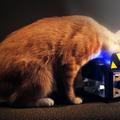 Szellemírtók macskaetető automata