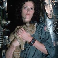 Saját képeskönyvet kapott az Alien-filmek macskája