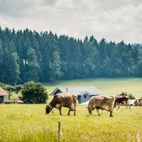 A farm, ahol gyengéden élünk