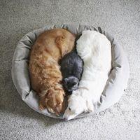 A 3 jó barát