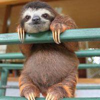 Állati cuki képek az Állatok világnapjára