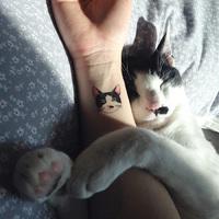 Te is macskás vagy?