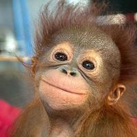 A világ legboldogabb állatkái