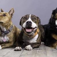 Szeretnél profi fotót a kutyádról?