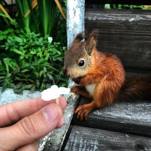 Vigyázat, cukiságriadó! Mentett mókus