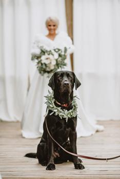 First look: amikor egy kutya meglátja menyasszonyként a gazdit
