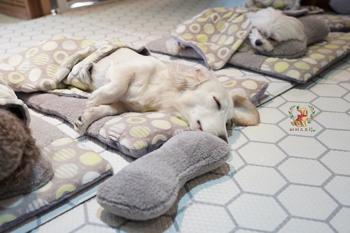 A kutyaovi alvó kutyusai felrobbantották a netet