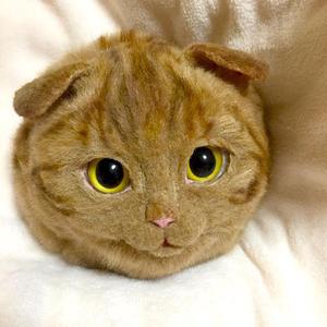 Macskatáska, mi más?!