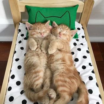 Cicák babaágyon