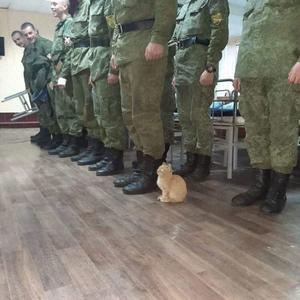 A macska rúgja meg... vagy ne?!
