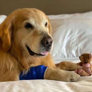 Super Bowl reklámot vett a kutyája megmentéséért köszönetképpen