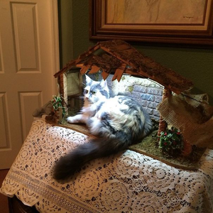 Egyértelmű bizonyíték: a macskák istennek képzelik magukat!