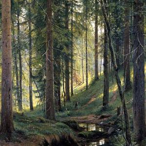 Amikor a lelked eltéved az erdőben