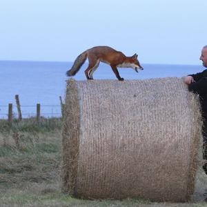 Ezeknek a rókáknak igazán jó fényképarca van!
