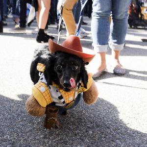A kutyáknak is jár a beöltözés! Állati cuki Halloween