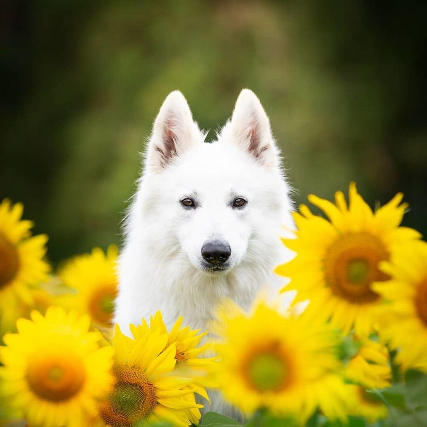 3_kutya.jpg