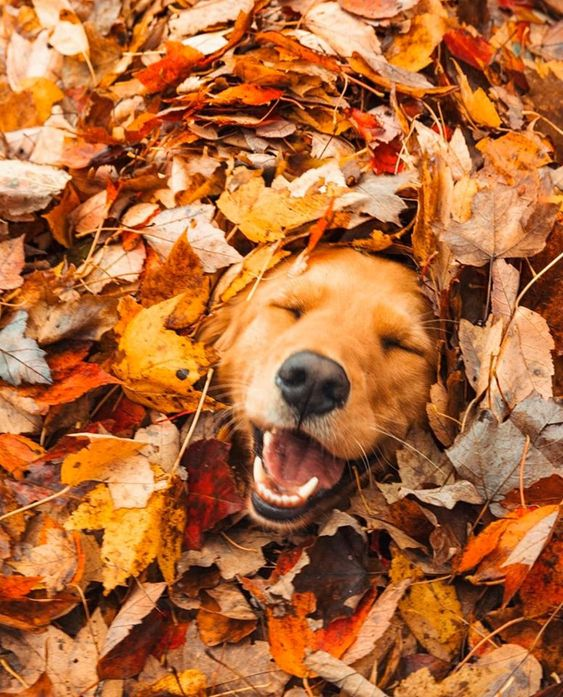 boldogsag_kutya.jpg