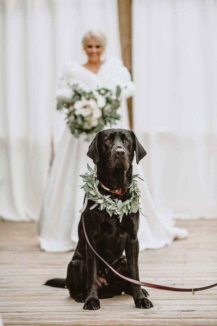bride-first-look-dog-kristen-dupree-farlow-photography-5de0c6921c833_700.jpg