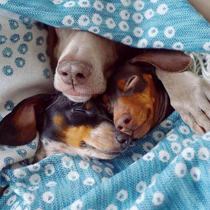 cute-dogs-sleep-together-best-friends-harlow-sage-indiana-reese-27.jpg