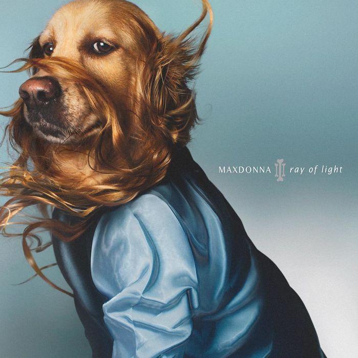 iconic-madonna-scenes-dog-recreation-maxdonna-vincent-flouret-5b5ae473755c8_700.jpg