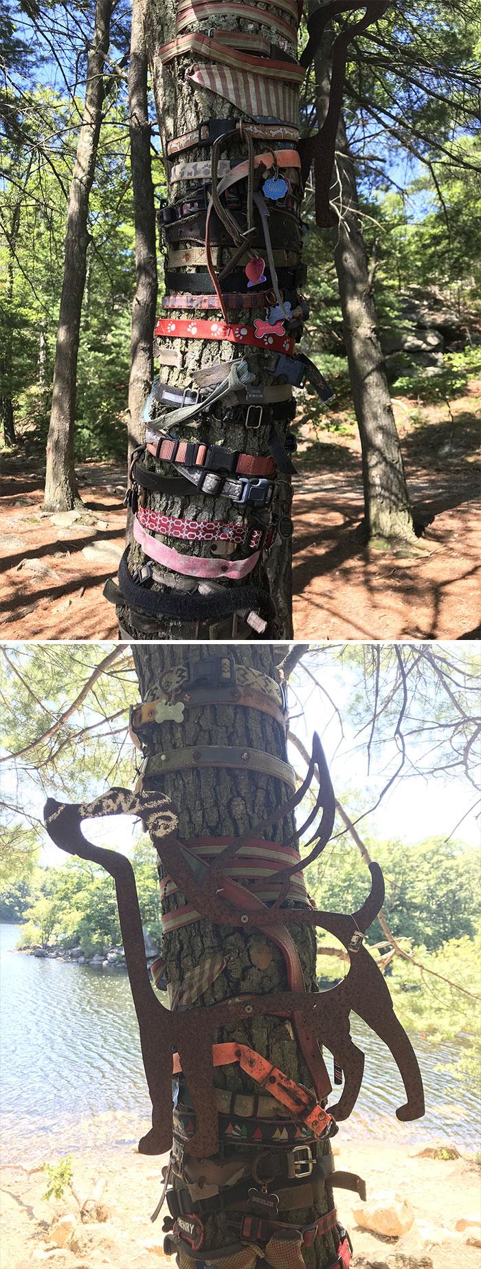 interesting-forest-finds-5-5cefe14a1c7af_700.jpg