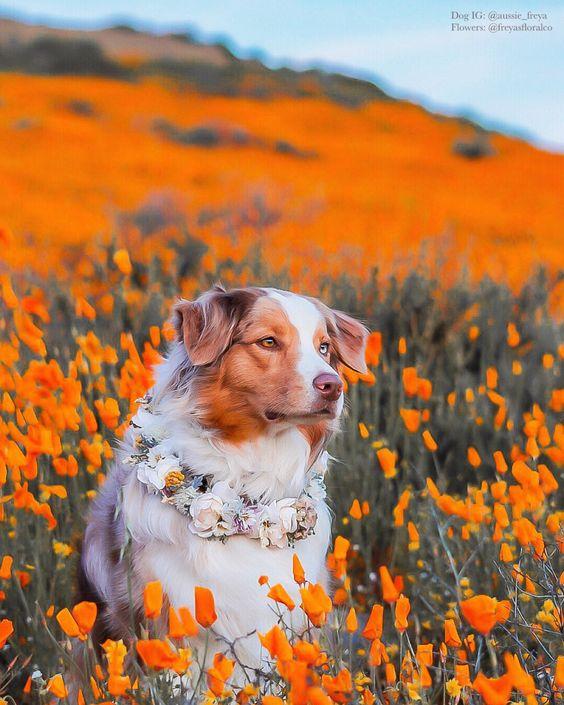 kutyacsokor.jpg