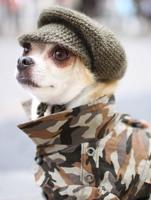 kutyaskepesmilitary.jpg