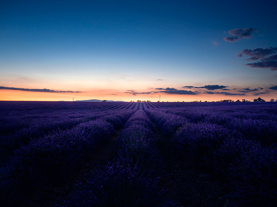 lavender-field-aerial-photography-samir-belhamra-1-5d5f9f76d4651_880.jpg